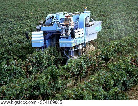 Maubec,france-september 15,2019: Mechanical Grape Harvesting Is The Most Efficient Method Of Removin