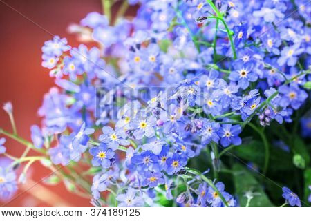 Fresh Pretty Delicate Flowers Of Blue Forget-me-nots