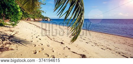 Palm And Tropical Beach. Vacation Holidays Travel Concept  Background Wallpaper. Beach And Sea. Summ