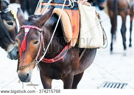 Head Of A Donkey Use To Transport People In Hydra, Greece.