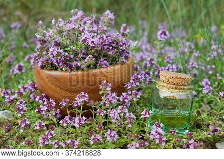 Bottle Of Thyme Essential Oil And Wooden Mortar Filled With Thymus Serpyllum Flowers On Meadow Outdo