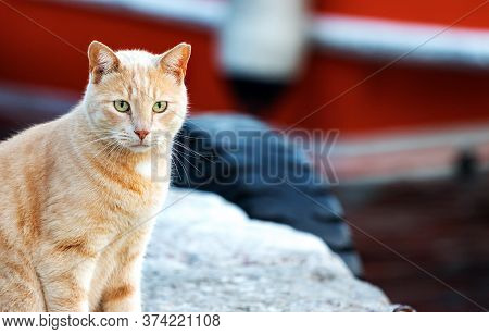 Portrait Of A Ginger Cat Alone In The Waterfront Looking The Sea For A Fish In Hydra, Greece.