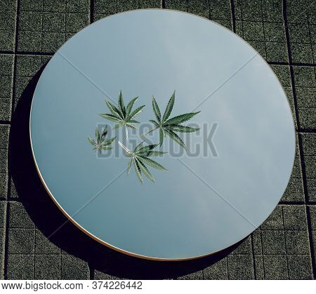 Green Cannabis Leaves Are Lying On The Mirror. The Mirror Reflects The Sky. The Mirror On The Dark G