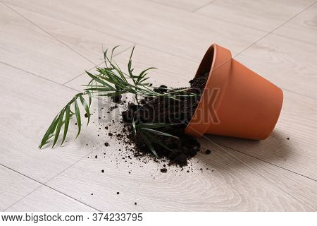 Overturned Terracotta Flower Pot With Soil And Plant On Wooden Floor