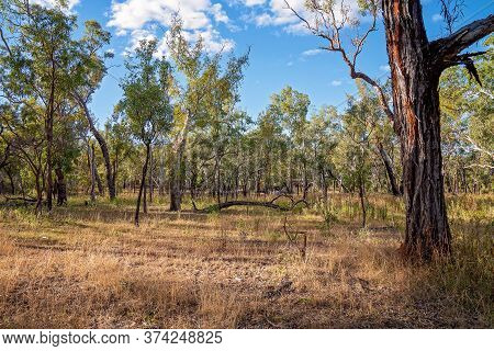 Australian Bushland Setting With Tourist Cabins Barely Visible Amongst The Trees In A Volcanic Natio