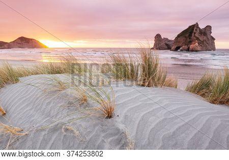Sand dune at Pacific ocean beach, New Zealand