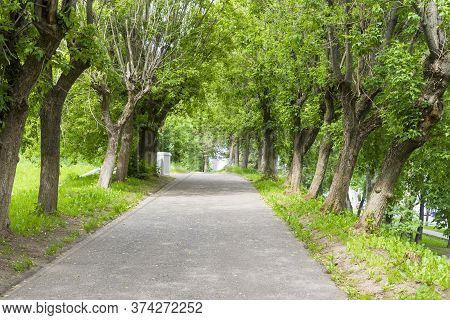 Paved Roads Between Trees And Green Grass, Empty Roads In The Village Area With Shrubs And Trees On