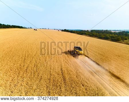 Aerial Drone View: Combine Harvesters Working In Wheat Field On Sunset. Harvesting Machine Driver Cu