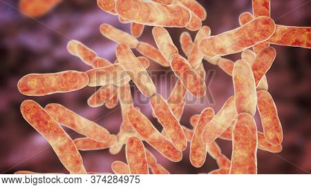 Bacteria Bifidobacterium, Gram-positive Anaerobic Rod-shaped Bacteria Which Are Part Of Normal Flora