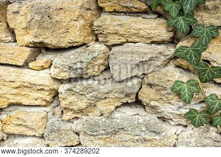 Ivy Rock Background With Copy Space And One Stem Of Ivy Crawling On The Rocks Surface.