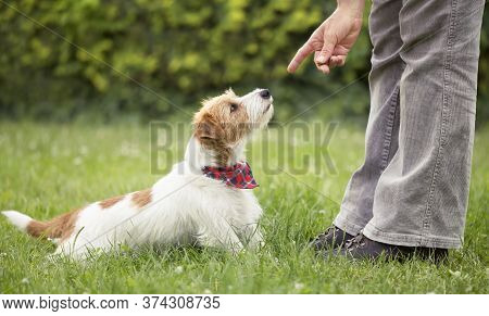 Trainer Teaching A Cute Smart Jack Russell Terrier Dog Puppy To Sit In The Grass. Pet Obedience Trai