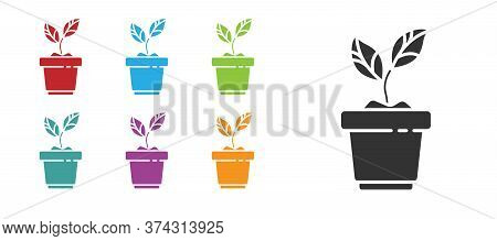 Black Plant In Pot Icon Isolated On White Background. Plant Growing In A Pot. Potted Plant Sign. Set