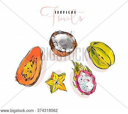 Hand Drawn Vector Graphic Abstract Artistic Exotic Fruits Illustrations Collection Set With Coconut,