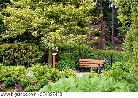 Bench Empty Seat In Nature. Chair In Park Or Garden Near Bushes And Green Trees. Relaxation, Tranqui