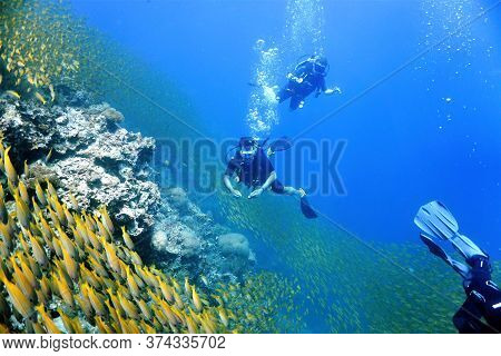 Underwater Photo Of Scuda Divers And School Of Fish In The Blue. From A Scuba Dive At Phi Phi Island