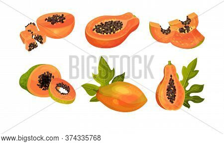 Papaya Fruit Cross Section Showing Orange Flesh And Numerous Black Seeds Vector Set