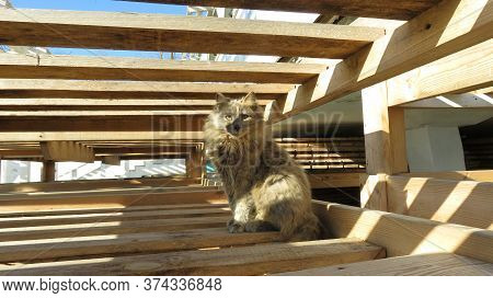 Proud Gray Cat With Long Unkempt Fur Sits In The Middle Of A Wooden Structure
