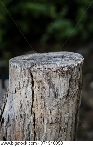 Cross Section Of The Tree. Wooden Background With Cracks. Old Tree Stump. Stump Of Tree Felled - Sec