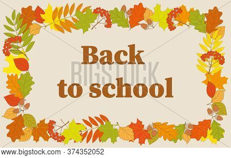 Slogan Back To School Into Frame With Colorful Autumn Foliage And Rowanberry Twigs. Vector Illustrat