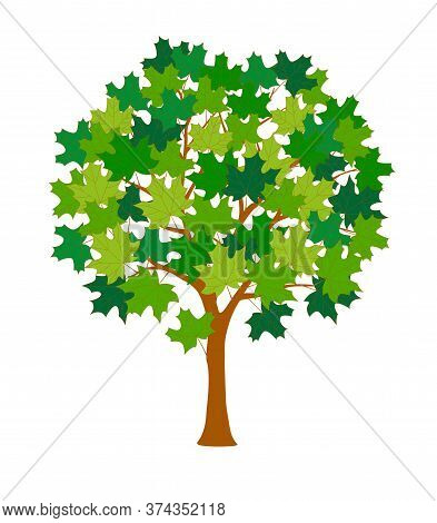 Cartoon Maple Tree With Green Leaves Isolated On The White Background. Contour Vector Illustration O