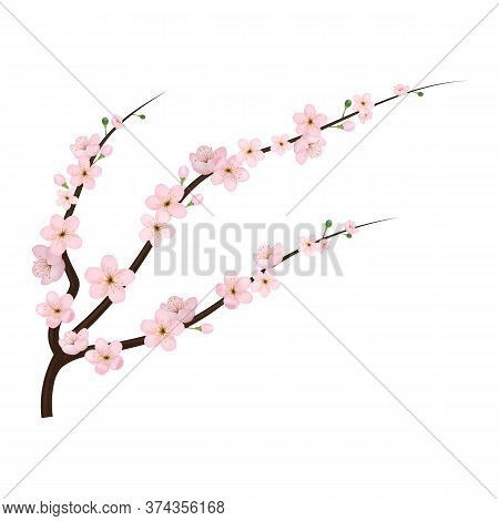 Realistic 3d Detailed Blooming Cherry Blossom Japanese Culture. Vector Illustration Of Spring Sakura