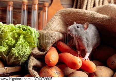 Rat On A Old Wooden Table With Vegetables And Kitchen Utensils.