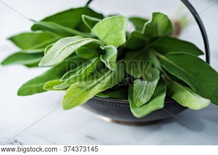 Fresh Sage Raw Leaves On The Background