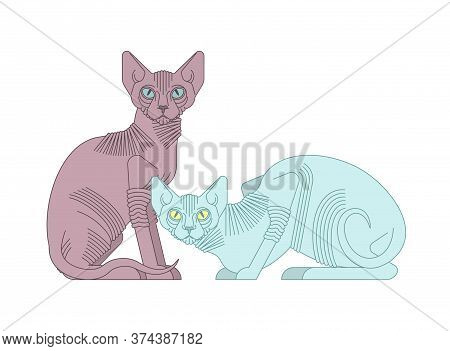 Sphynx Cat Isolated. Hairless Cat Breeds. Pet Vector Illustration