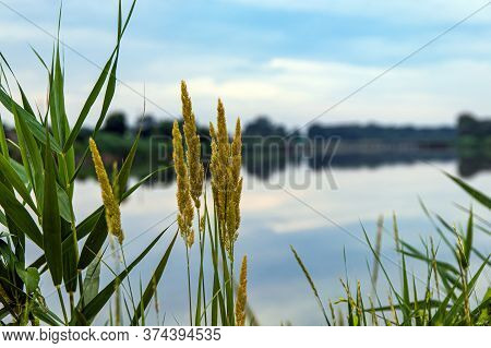 Sunny Summer Landscape With A River. Green Reeds Along The Banks Of A Quiet River Reflected Clouds I