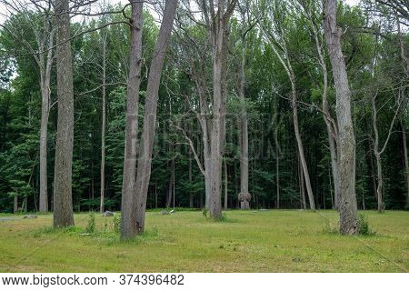 Summer Landscape Image With Nicely Spaced Trees Along The Edge Of The Forest In Monmouth County New
