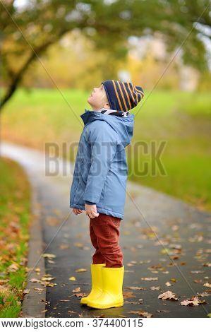 Preschooler Boy Walking In Autumn Park. Kid Exploring Nature. Outdoor Activities For Children. Strol