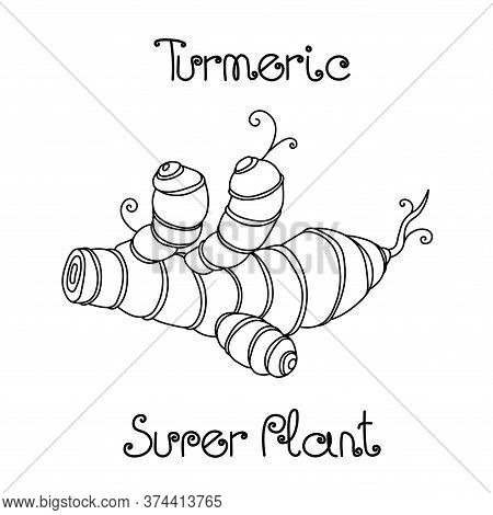 Fresh Ginger Or Turmeric Root, Culinary Spice For Cooking, Herbal Plant, Healthy Food, Vector Illust