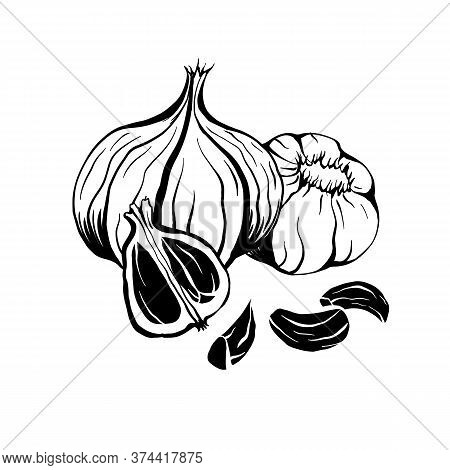 Illustration Of Black Fermented Garlic. Product For Health And Longevity. Useful Seasoning For Asian
