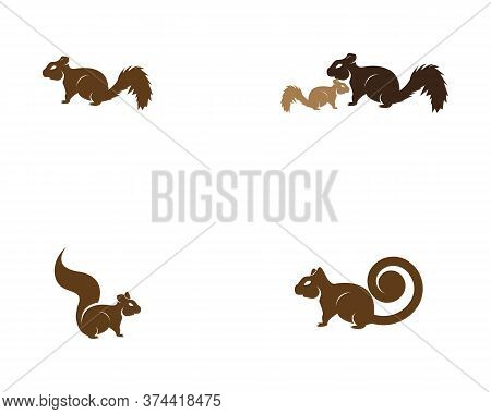 Squirrel Set Image Logo Symbol Vector Illustration On White Background