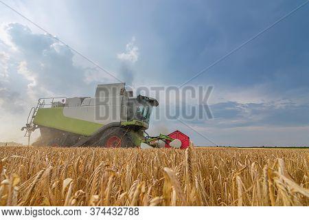 Combine Harvesting A Wheat Field. Combine Working The Field.