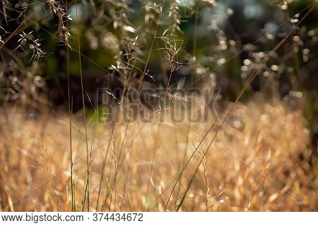 Intentionally Blurred Brown Grass Background With Spots Of Light
