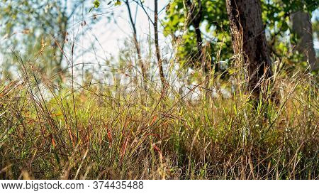 Intentionally Blurred Brown Grass Background With Shafts Of Light And A Blue Sky Beyond