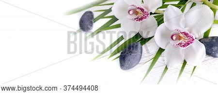 Panoramic View On Beautiful White Orchid On Leaf And Pebbles On White Copy Space