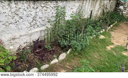 Green Side Of The Garden Near The Grey Wall
