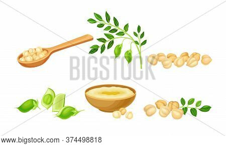 Chickpea As Annual Legume Plant With Green Stems And Proteinic Beige Peas Poured In Bowl Vector Set