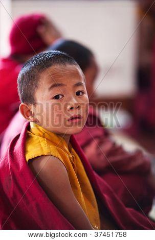 Little Buddhist Monk