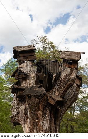 Several Man Made Bird Houses On A Dead Tree. Helping Bird Populations In The Cities. Cloudy Day, Ver