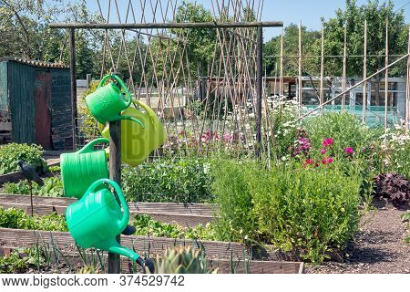 Dutch Allotment Garden With Covered Vegetables, Bean Stakes And Sheds