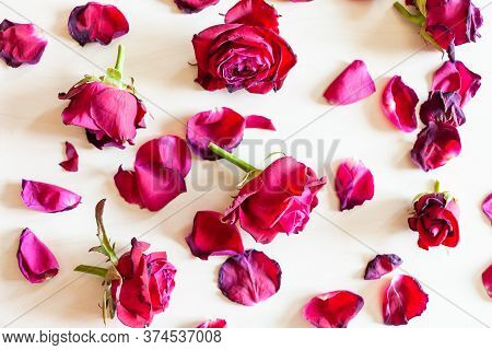 Top View Of Many Fallen Petals And Blooms Of Withered Red Garden Rose Flowers On Pale Wooden Backgro