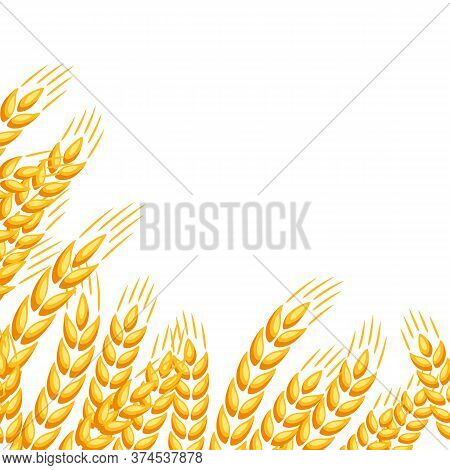 Background With Wheat. Agricultural Image Natural Golden Ears Of Barley Or Rye.
