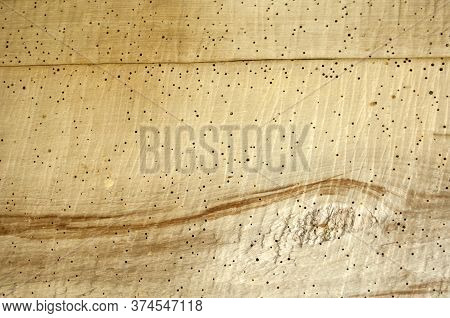 Bright Wood Texture With Holes From Beetles And Brown Pattern. Defects Of Wood. Damage To The Timber