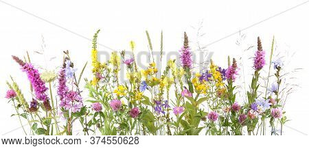 Flowering Wild Grass And Herbs Isolated On White Background. Border Of Meadow Flowers Wildflowers An
