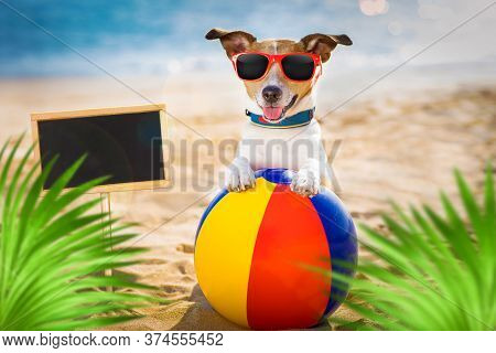 Jack Russel Dog  At The Beach Ocean Shore, On Summer Vacation Holidays  With A Plastic Ball, Banner
