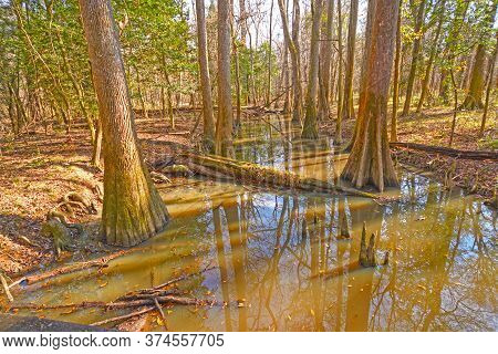 Backwater Slough In The Bottomland Forest In Congaree National Park In South Carolina