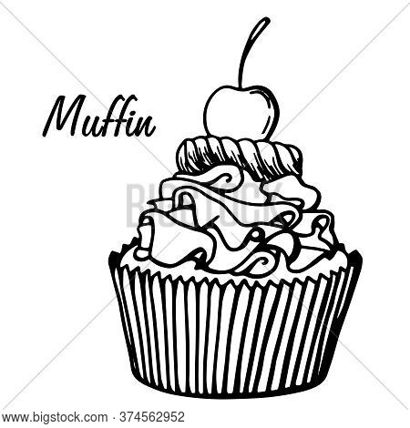 Muffin Simple Illustration . Cupcake With Different Flavors . Outline Hand Drawn Muffin Cookie.